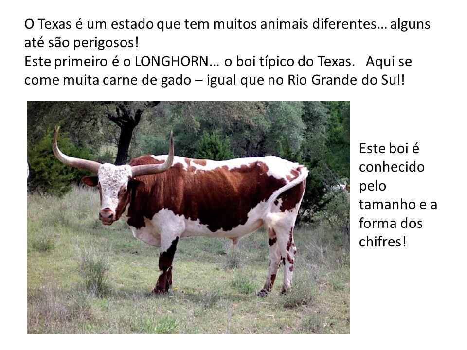 O Texas é um estado que tem muitos animais diferentes… alguns até são perigosos!