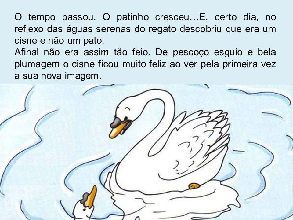 O tempo passou. O patinho cresceu…E, certo dia, no reflexo das águas serenas do regato descobriu que era um cisne e não um pato.