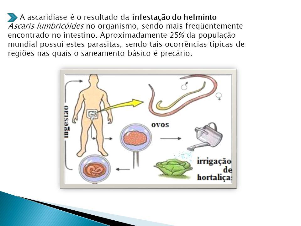 A ascaridíase é o resultado da infestação do helminto