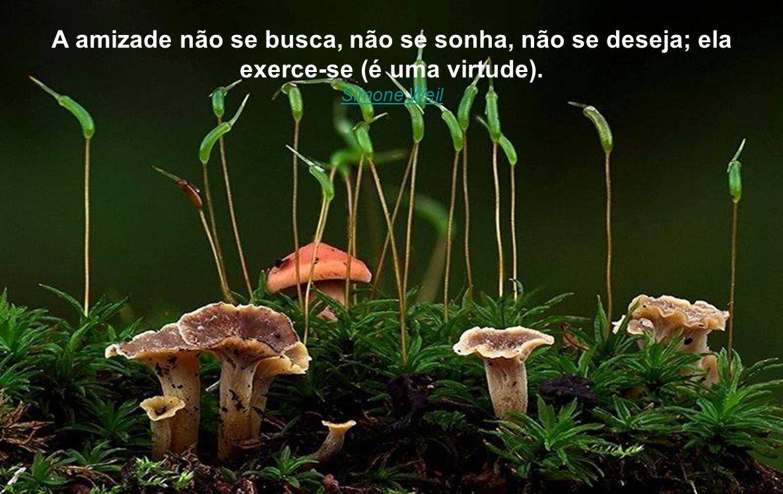 A amizade não se busca, não se sonha, não se deseja; ela exerce-se (é uma virtude).