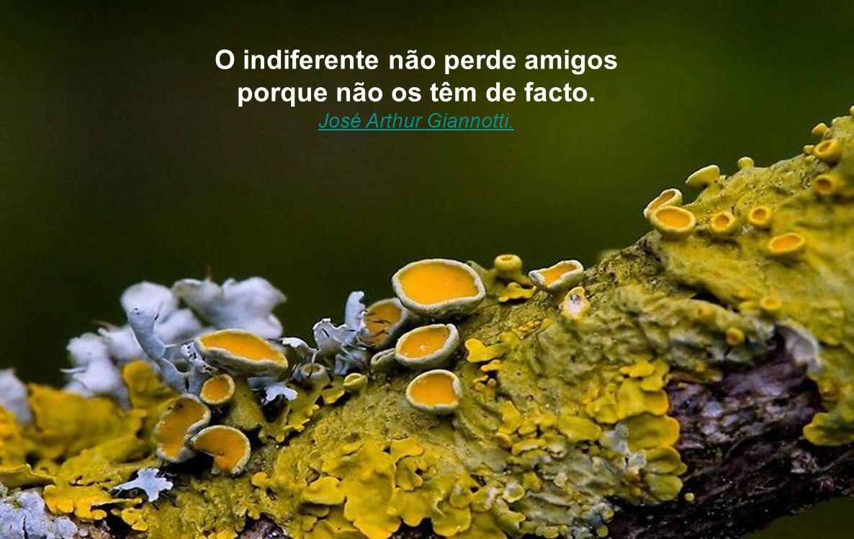 O indiferente não perde amigos porque não os têm de facto.