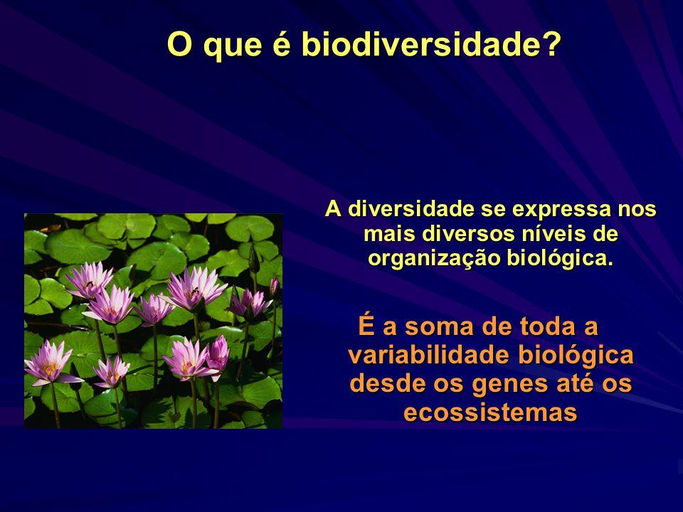 O que é biodiversidade A diversidade se expressa nos mais diversos níveis de organização biológica.