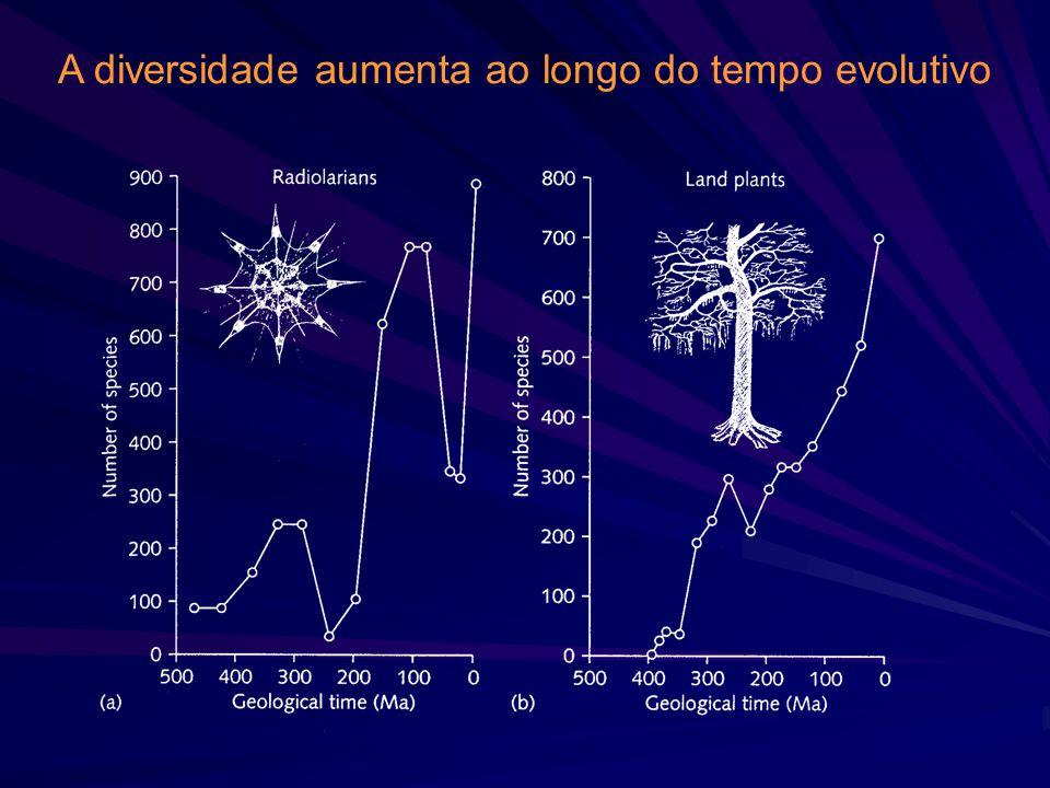 A diversidade aumenta ao longo do tempo evolutivo