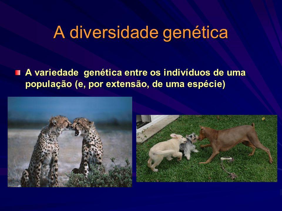 A diversidade genética