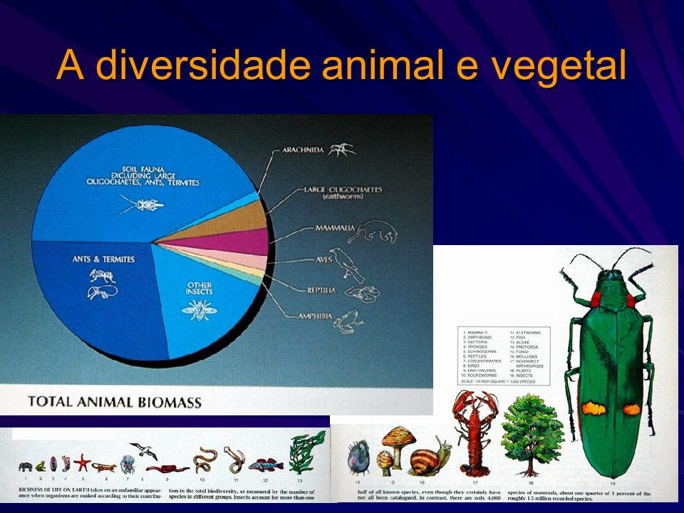 A diversidade animal e vegetal