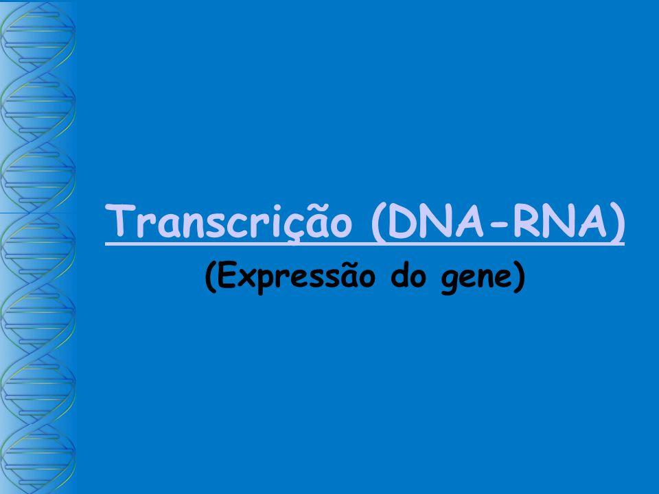 Transcrição (DNA-RNA)