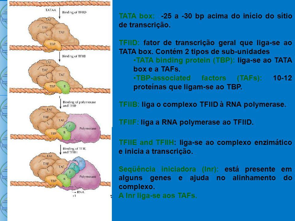 TATA box: -25 a -30 bp acima do início do sítio de transcrição.