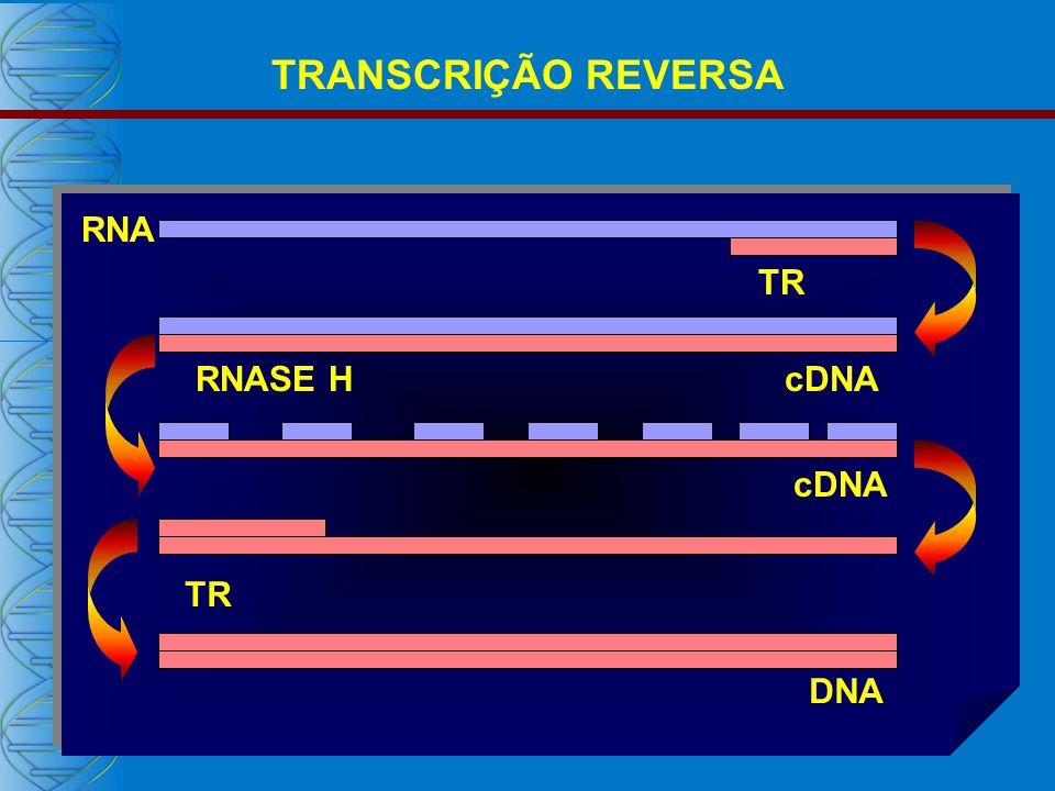 TRANSCRIÇÃO REVERSA RNA cDNA DNA TR RNASE H TR