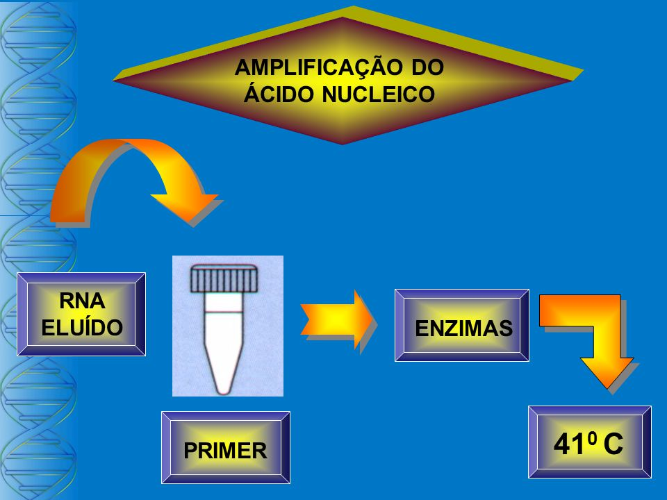 AMPLIFICAÇÃO DO ÁCIDO NUCLEICO PRIMER RNA ELUÍDO ENZIMAS 410 C