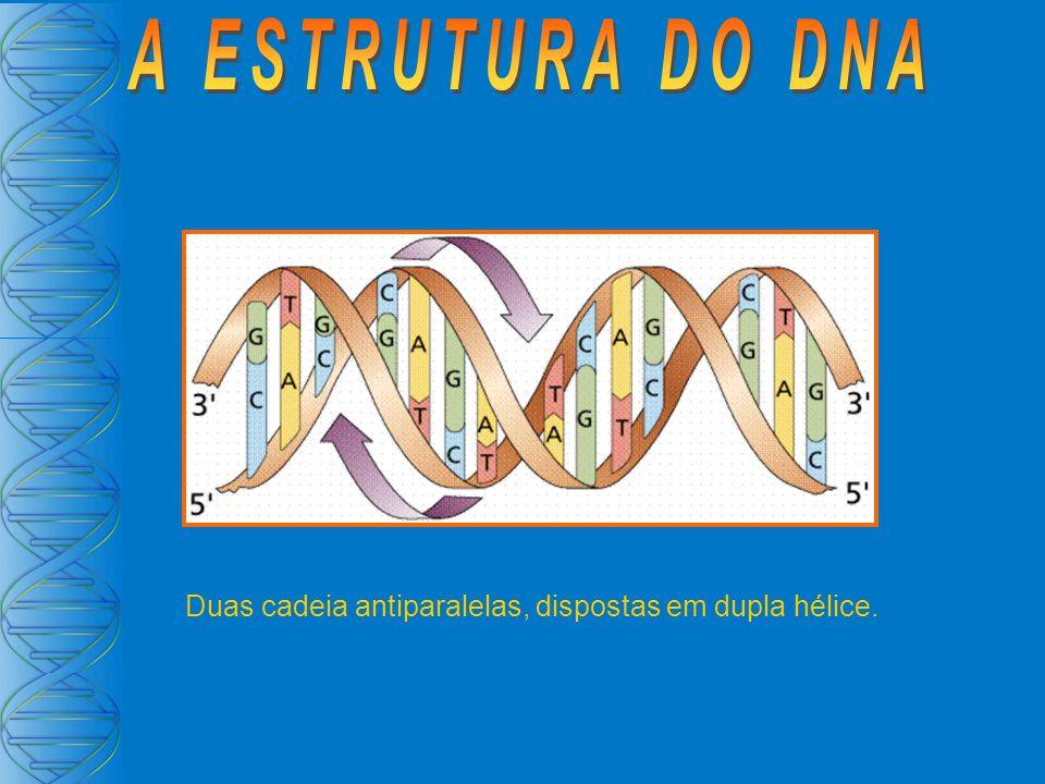 A ESTRUTURA DO DNA Duas cadeia antiparalelas, dispostas em dupla hélice.