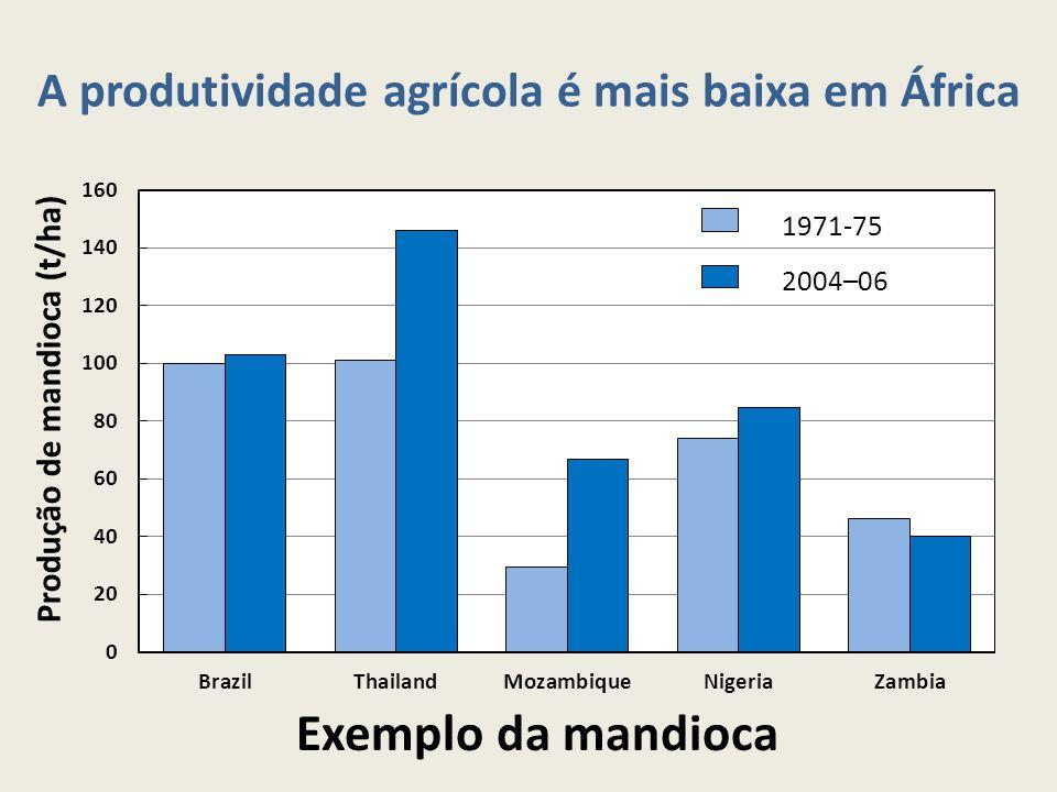 A produtividade agrícola é mais baixa em África