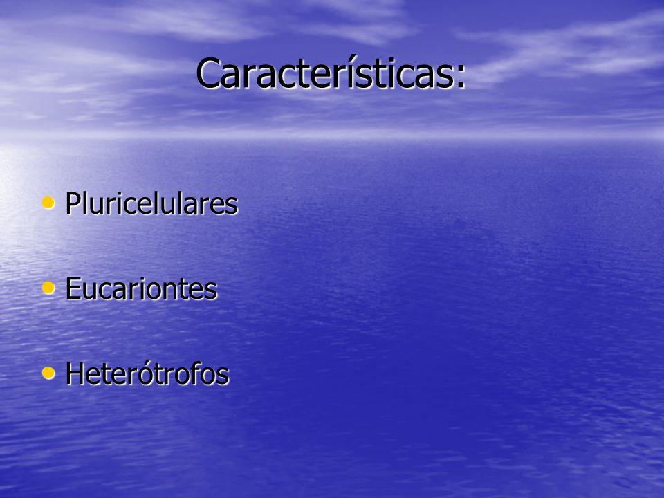 Características: Pluricelulares Eucariontes Heterótrofos