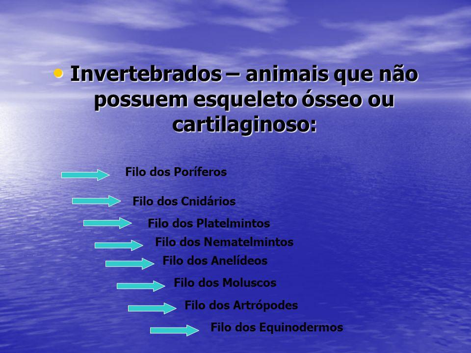 Invertebrados – animais que não possuem esqueleto ósseo ou cartilaginoso: