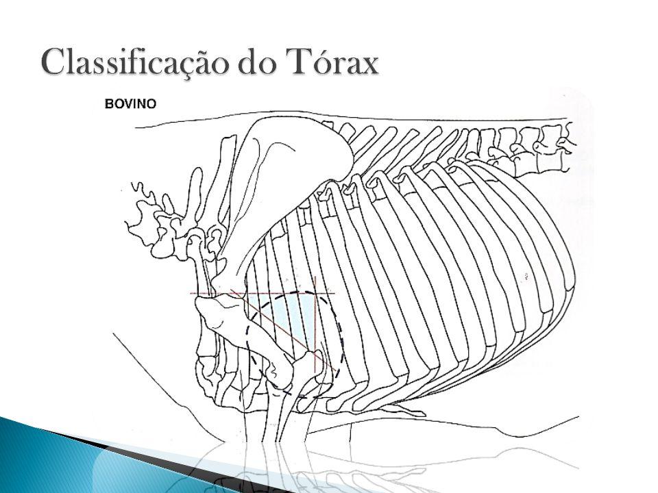 Classificação do Tórax