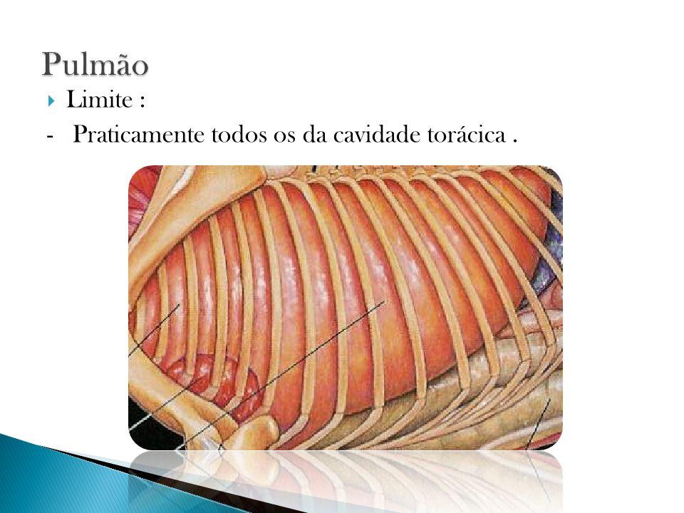 Pulmão Limite : - Praticamente todos os da cavidade torácica .