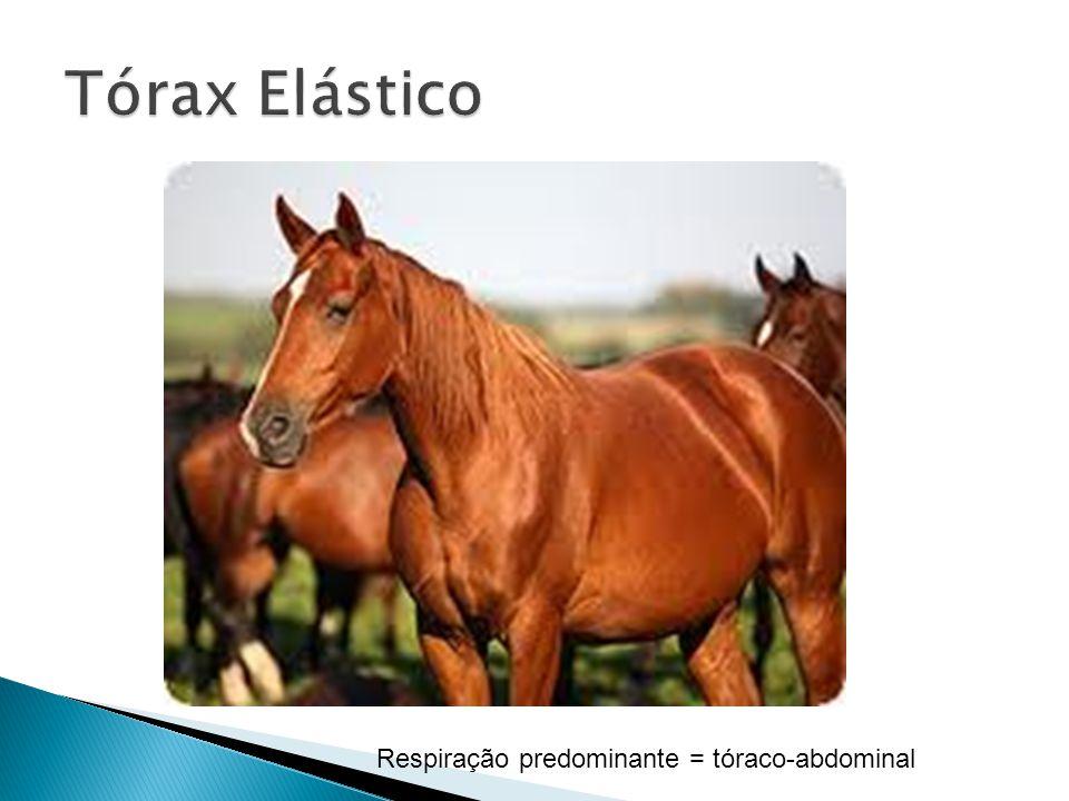 Tórax Elástico Respiração predominante = tóraco-abdominal