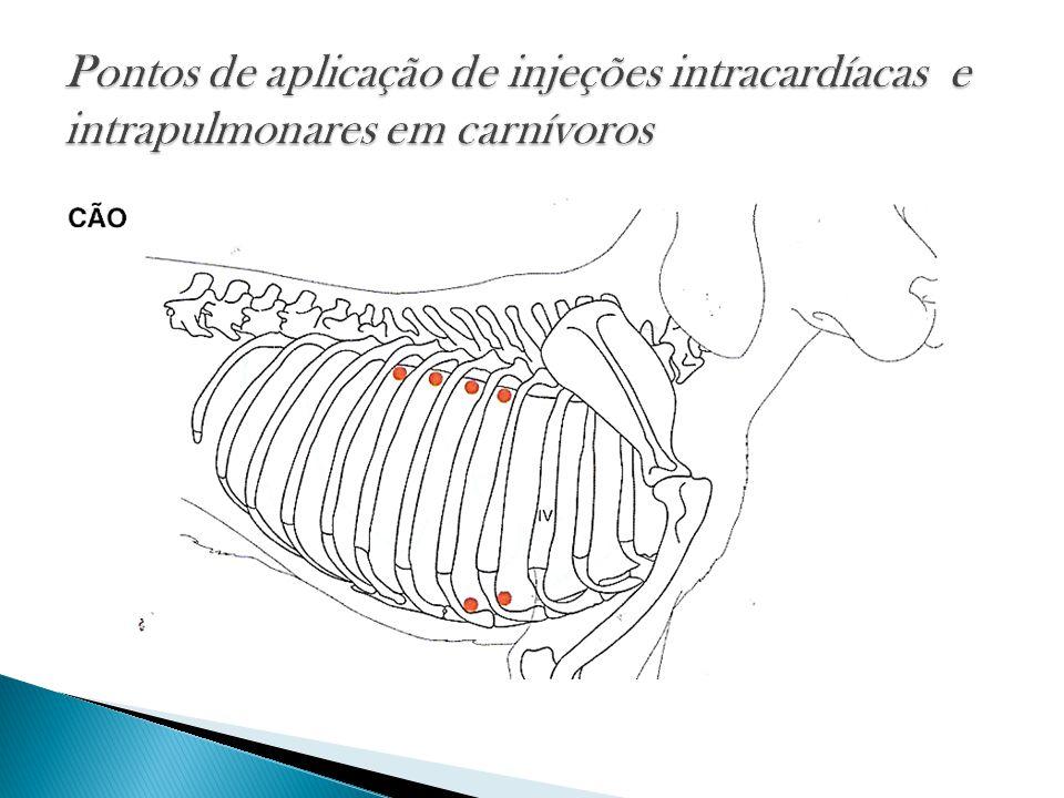 Pontos de aplicação de injeções intracardíacas e intrapulmonares em carnívoros