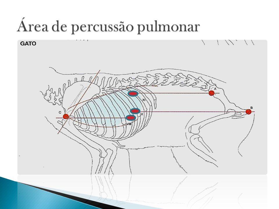 Área de percussão pulmonar