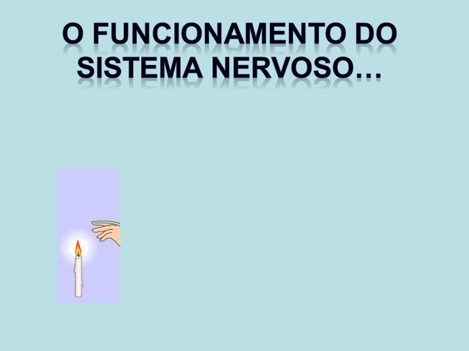 O funcionamento do Sistema Nervoso…