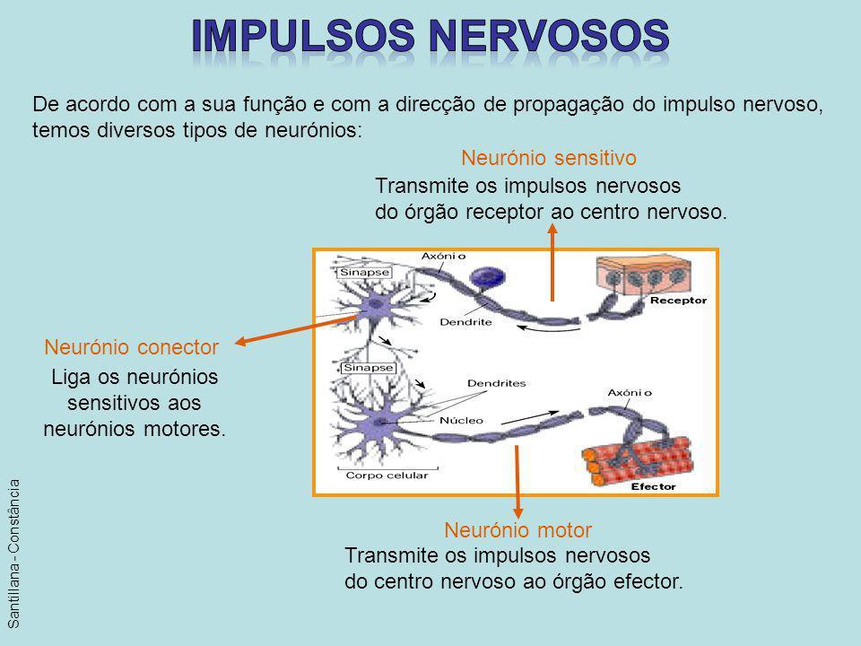 impulsos nervosos De acordo com a sua função e com a direcção de propagação do impulso nervoso, temos diversos tipos de neurónios: