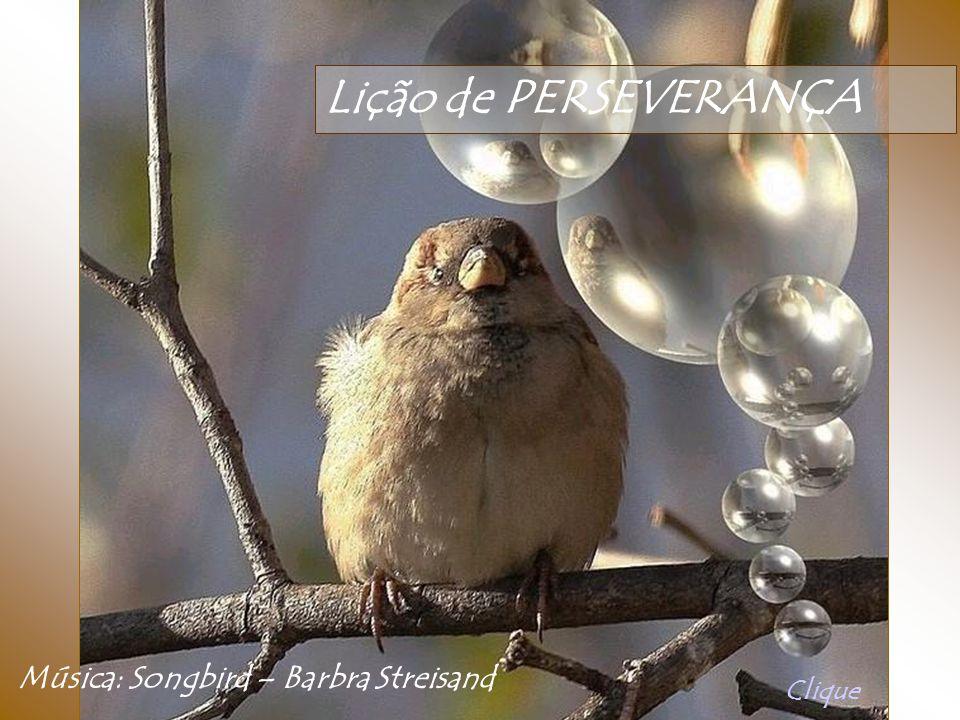 Lição de PERSEVERANÇA Música: Songbird – Barbra Streisand Clique