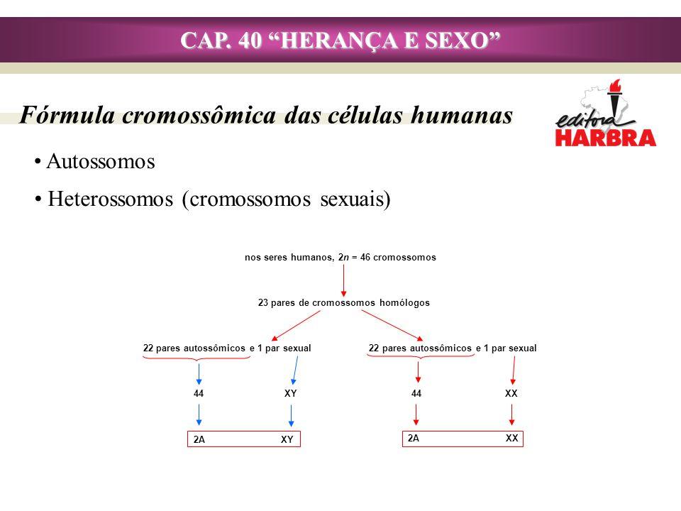 Fórmula cromossômica das células humanas