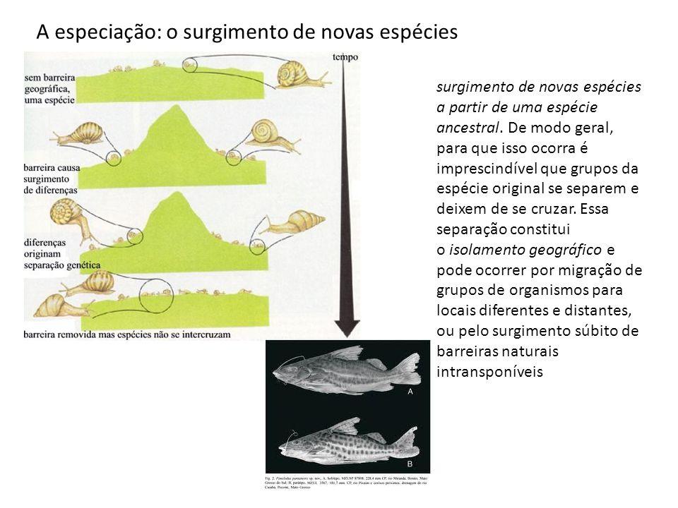 A especiação: o surgimento de novas espécies