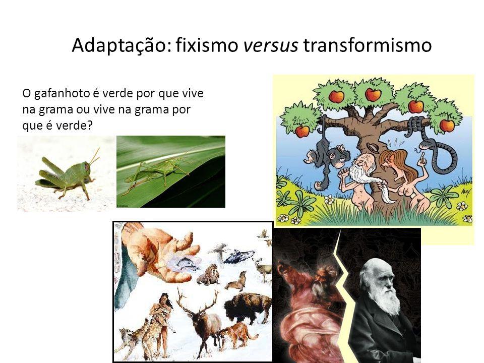 Adaptação: fixismo versus transformismo