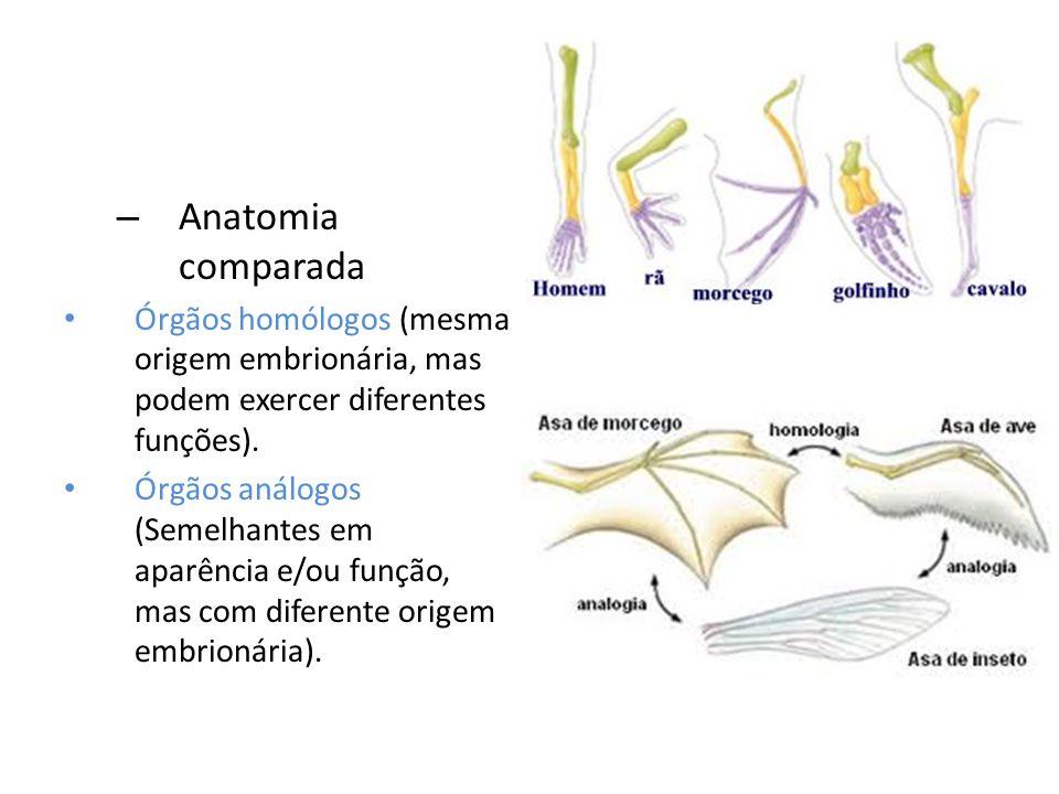 Anatomia comparada Órgãos homólogos (mesma origem embrionária, mas podem exercer diferentes funções).