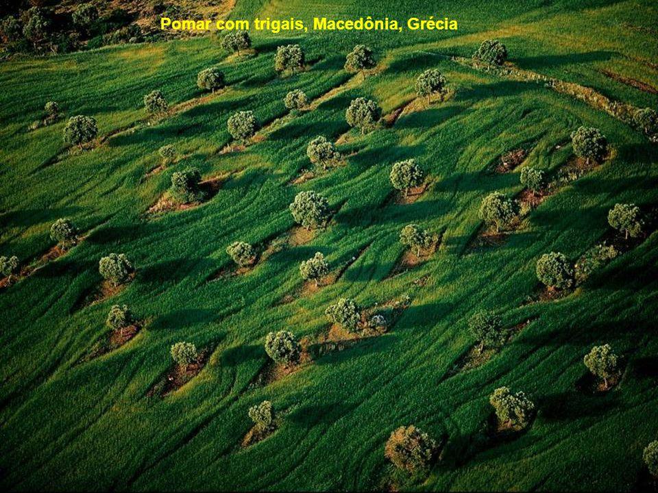Pomar com trigais, Macedônia, Grécia