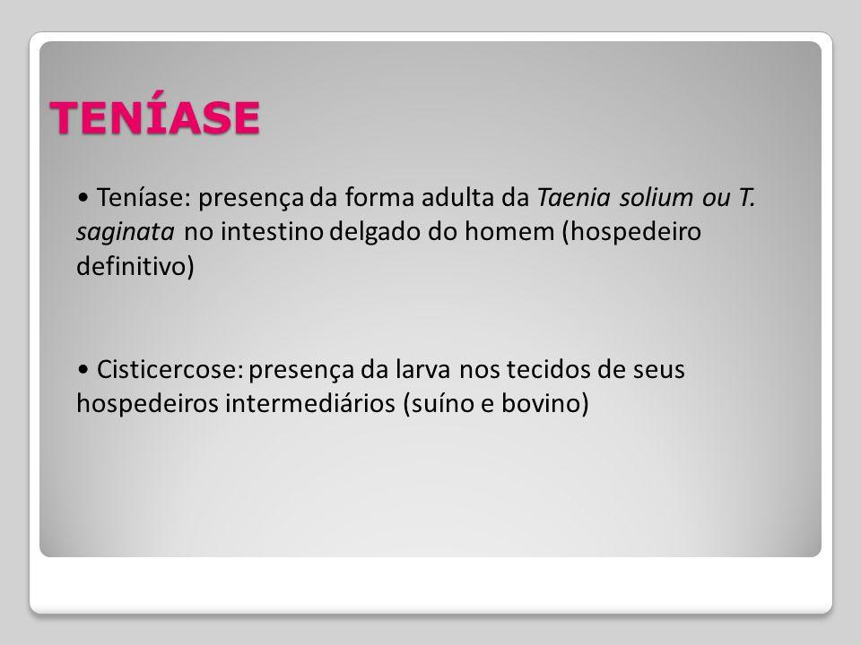 TENÍASE • Teníase: presença da forma adulta da Taenia solium ou T. saginata no intestino delgado do homem (hospedeiro definitivo)