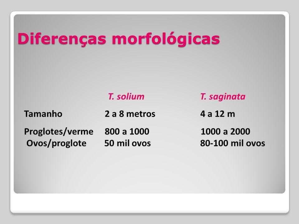 Diferenças morfológicas