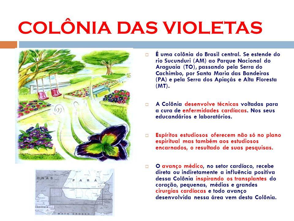 COLÔNIA DAS VIOLETAS