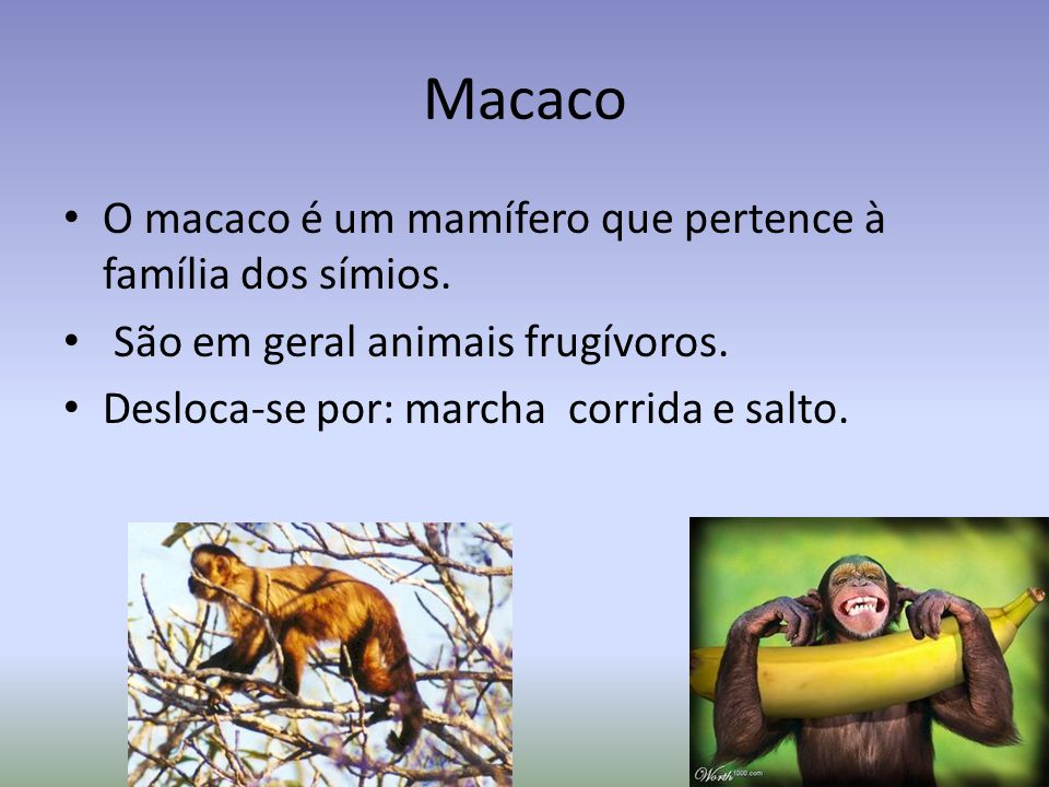Macaco O macaco é um mamífero que pertence à família dos símios.