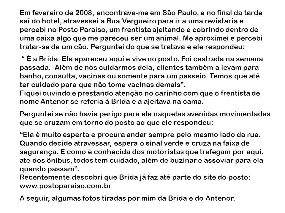 Em fevereiro de 2008, encontrava-me em São Paulo, e no final da tarde saí do hotel, atravessei a Rua Vergueiro para ir a uma revistaria e percebi no Posto Paraíso, um frentista ajeitando e cobrindo dentro de uma caixa algo que me pareceu ser um animal. Me aproximei e percebi tratar-se de um cão. Perguntei do que se tratava e ele respondeu:
