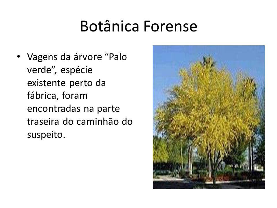 Botânica Forense Vagens da árvore Palo verde , espécie existente perto da fábrica, foram encontradas na parte traseira do caminhão do suspeito.