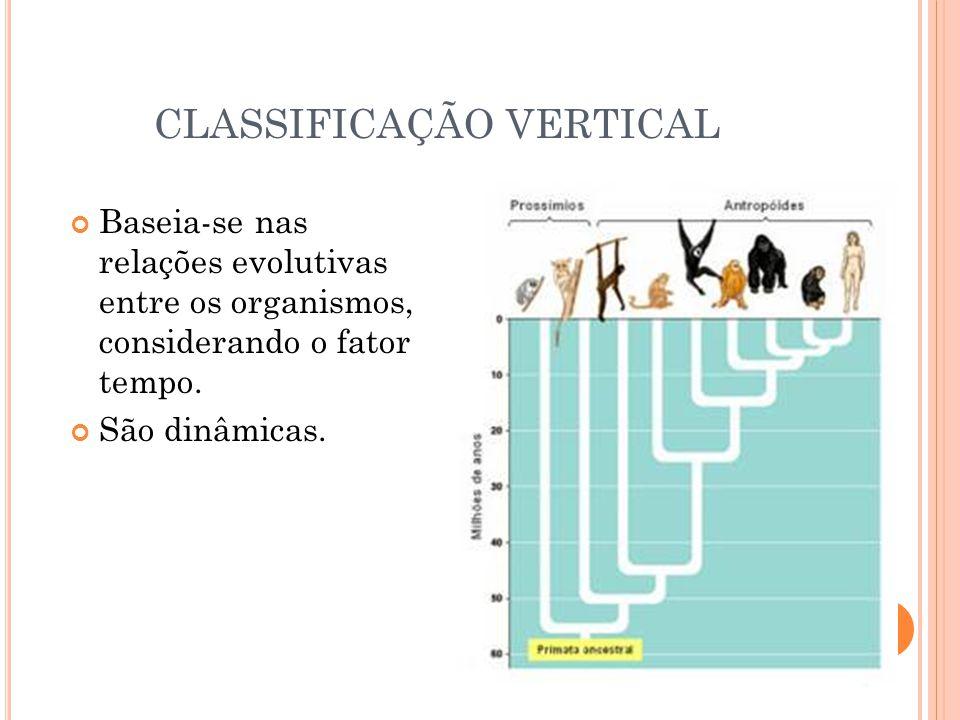 CLASSIFICAÇÃO VERTICAL