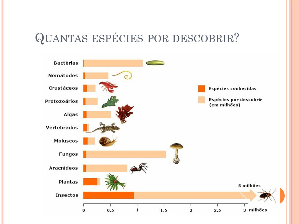 Quantas espécies por descobrir