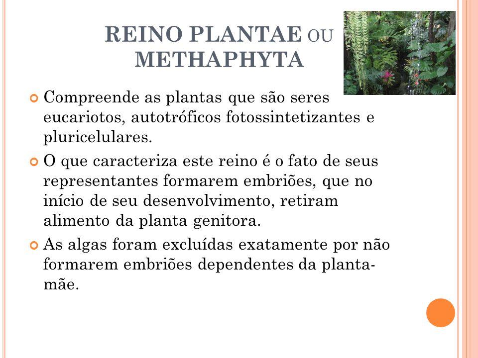 REINO PLANTAE ou METHAPHYTA