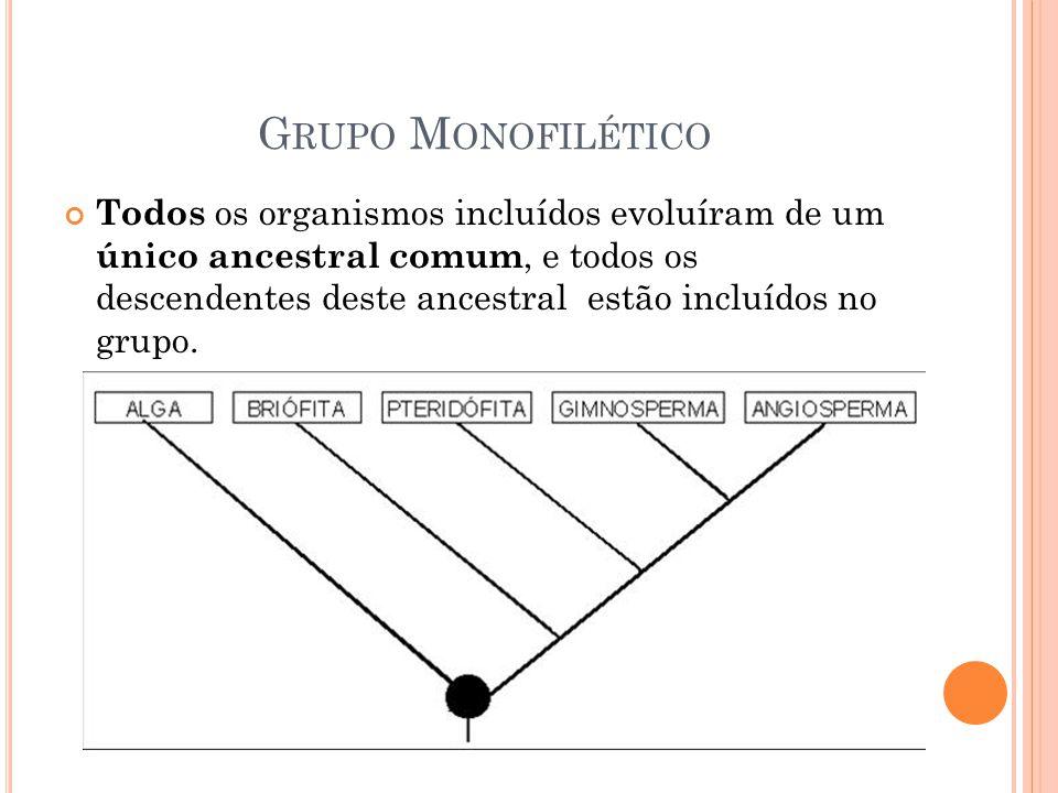 Grupo Monofilético