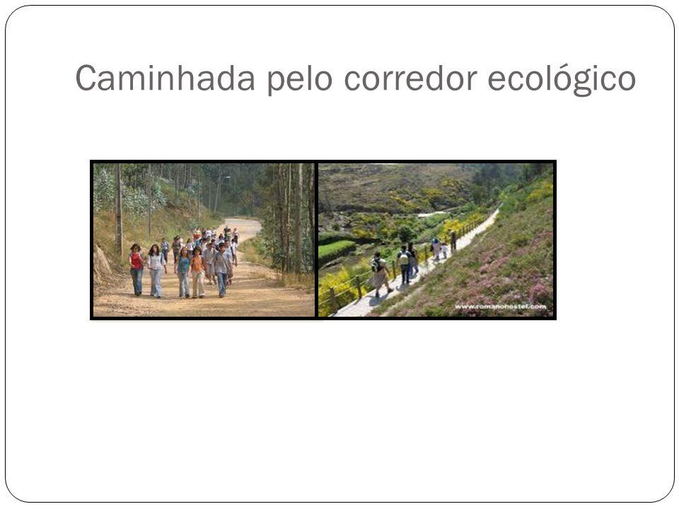 Caminhada pelo corredor ecológico