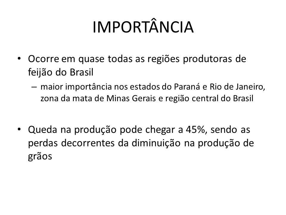 IMPORTÂNCIA Ocorre em quase todas as regiões produtoras de feijão do Brasil.