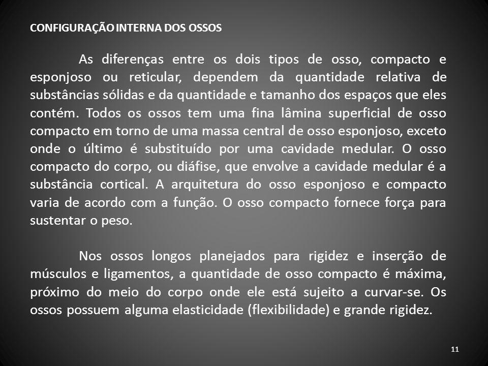 CONFIGURAÇÃO INTERNA DOS OSSOS