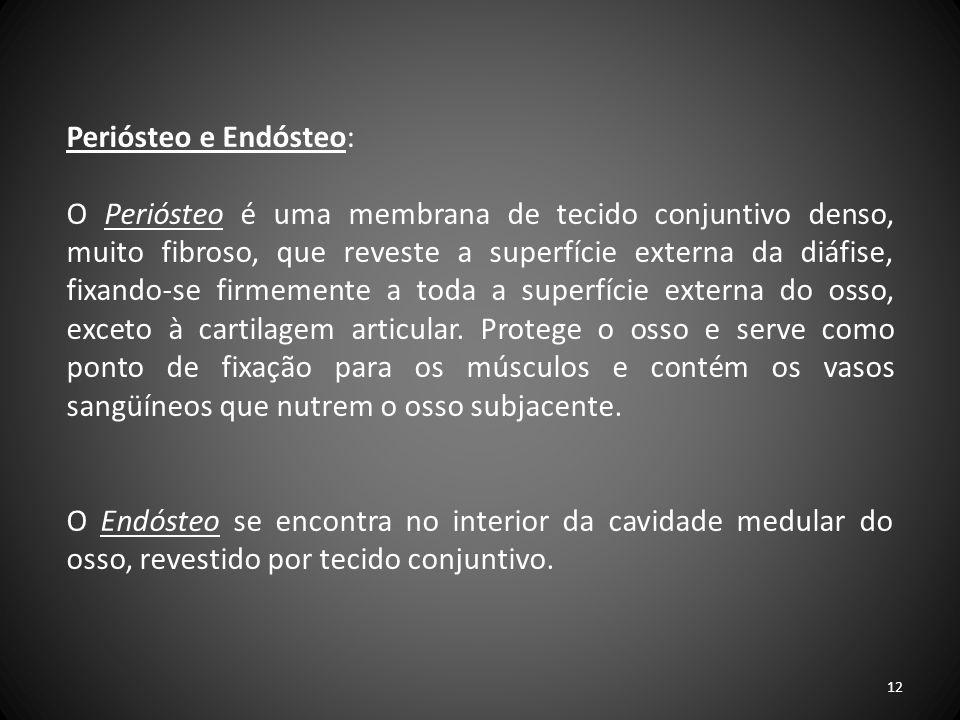 Periósteo e Endósteo: