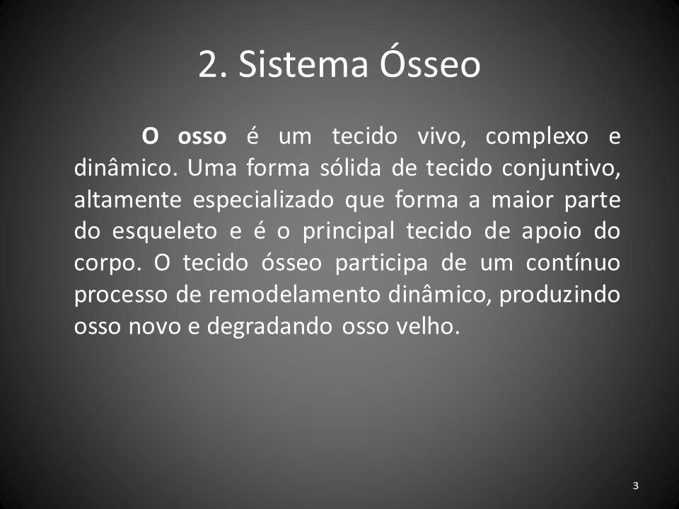 2. Sistema Ósseo