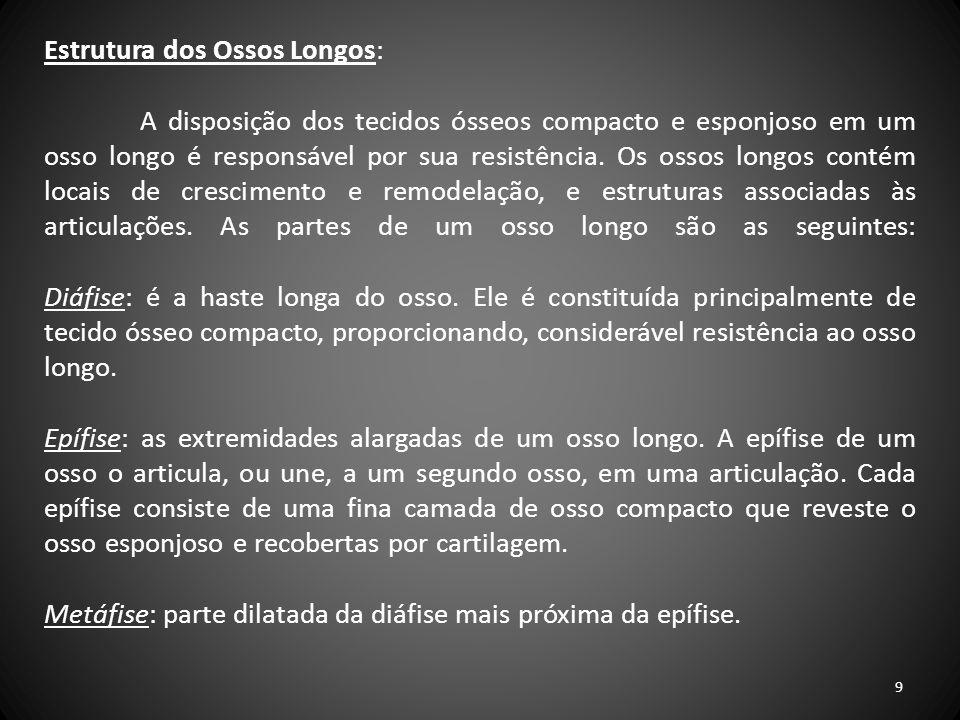 Estrutura dos Ossos Longos: