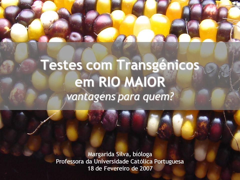 Testes com Transgénicos em RIO MAIOR vantagens para quem