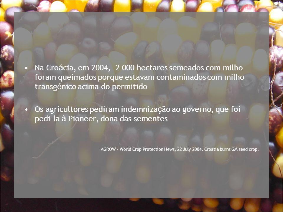 Na Croácia, em 2004, 2 000 hectares semeados com milho foram queimados porque estavam contaminados com milho transgénico acima do permitido