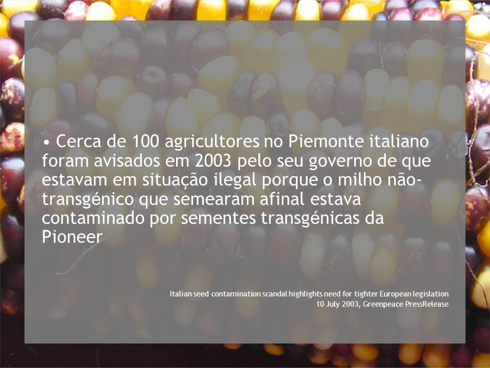 Cerca de 100 agricultores no Piemonte italiano foram avisados em 2003 pelo seu governo de que estavam em situação ilegal porque o milho não-transgénico que semearam afinal estava contaminado por sementes transgénicas da Pioneer