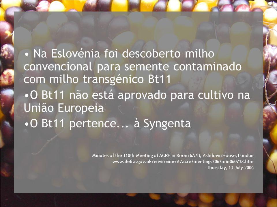 O Bt11 não está aprovado para cultivo na União Europeia